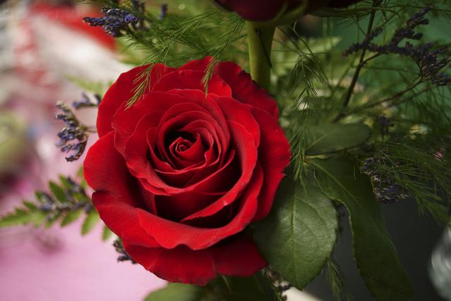 Ruže - Page 2 11876807