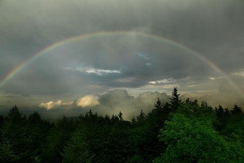 Duga - Page 3 Rainbow-Gods-Earth-Covenant---Virginia---ForestWan