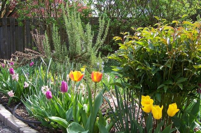 Cvijeće oko kuće  - Page 2 12510817