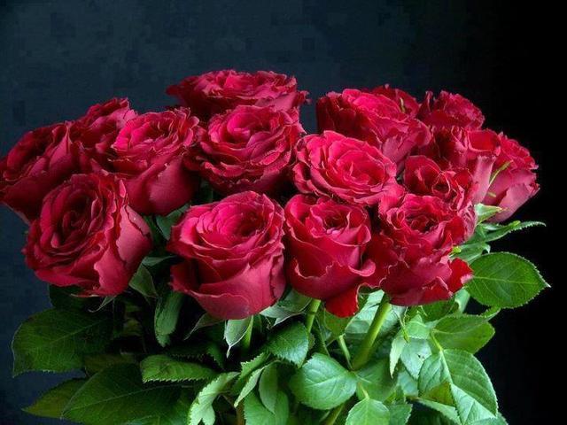Ruže - Page 2 12884122