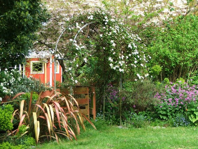 Cvijeće oko kuće  - Page 2 13125582