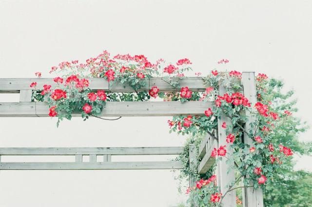 Cvijeće oko kuće  - Page 3 13297337
