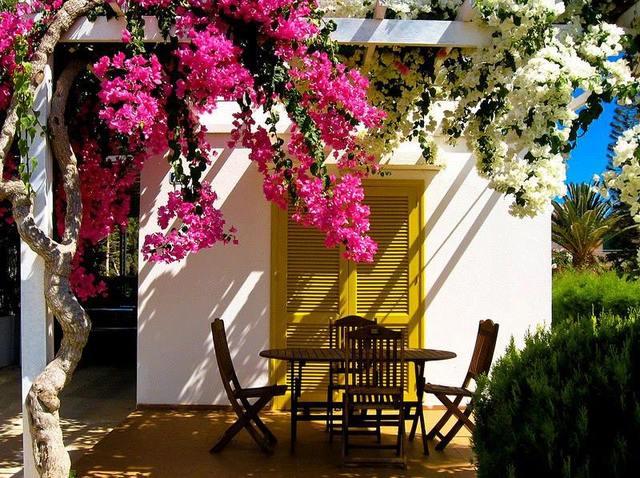 Cvijeće oko kuće  - Page 3 13393617