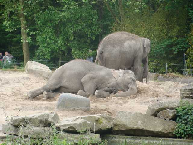 waar slapen olifanten