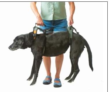 Hond trap op tillen