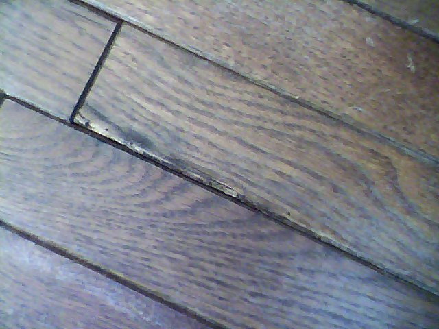 Infested Hardwood Flooring How To Prevent Re Infestation